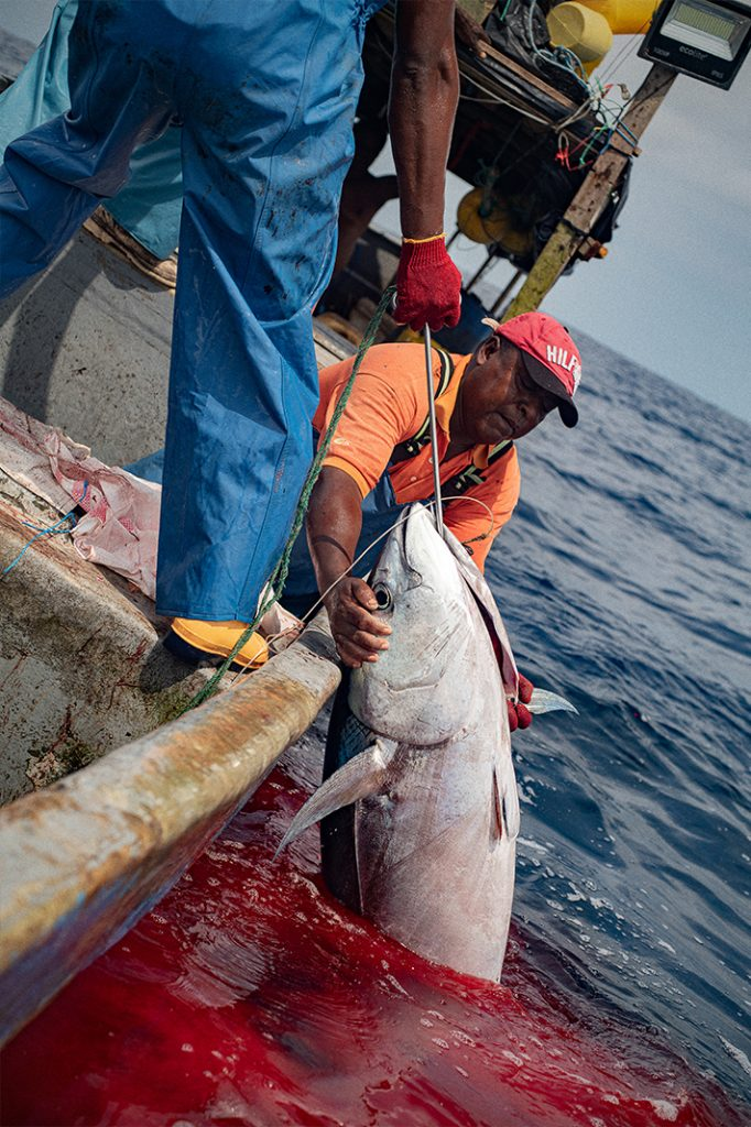 Albacora de aleta amarilla. Un tipo de atún propio de aguas tropicales. La joya de la corona. Es el pescado por el que mejor se paga. Nunca se consume en el mercado local, es carne de exportación.