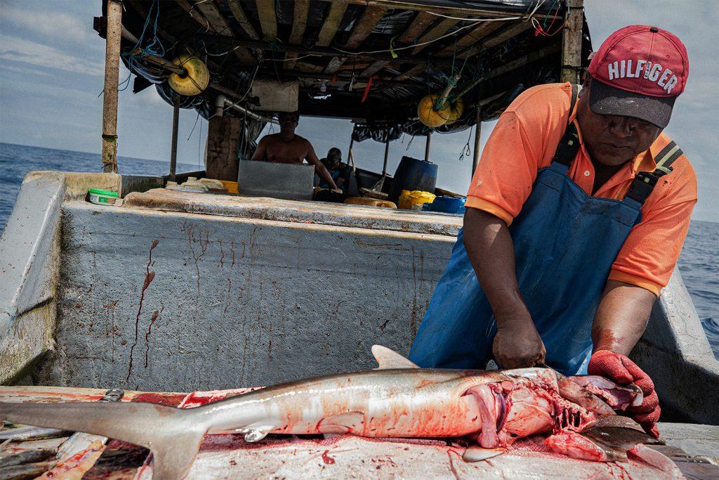 Augusto destripa un tiburón